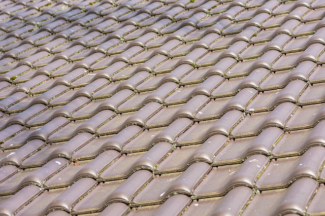 Tauranga roof repairs
